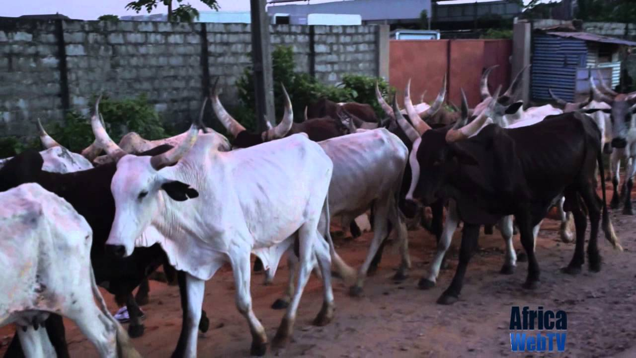 Sights & Sounds of Nigeria